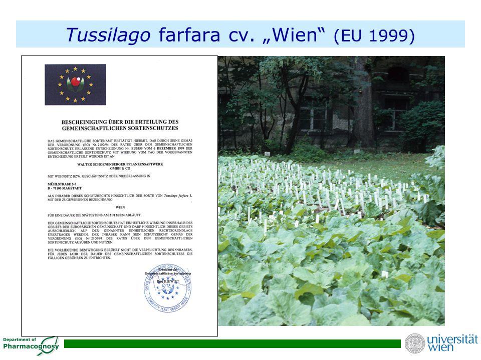 """Tussilago farfara cv. """"Wien"""" (EU 1999)"""