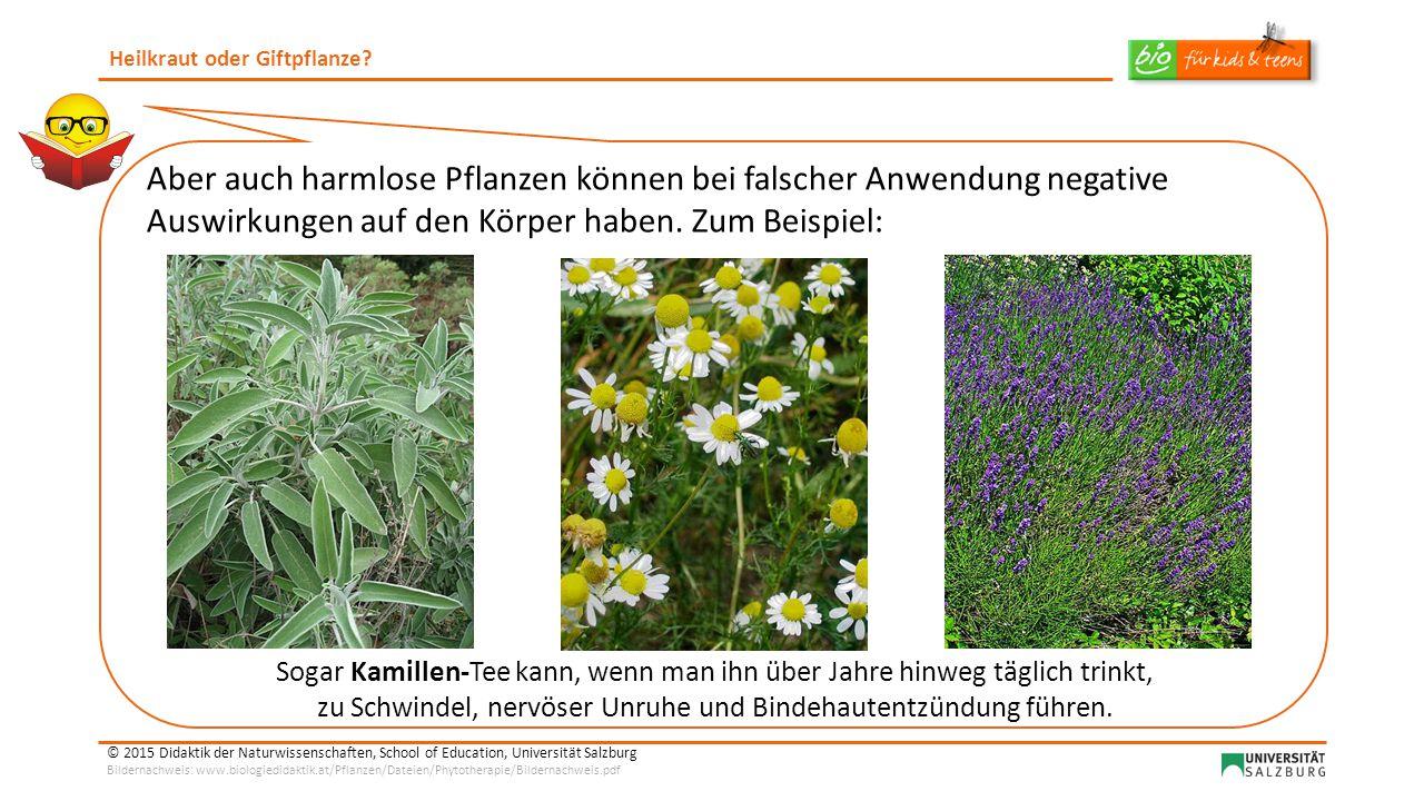 Heilkraut oder Giftpflanze.