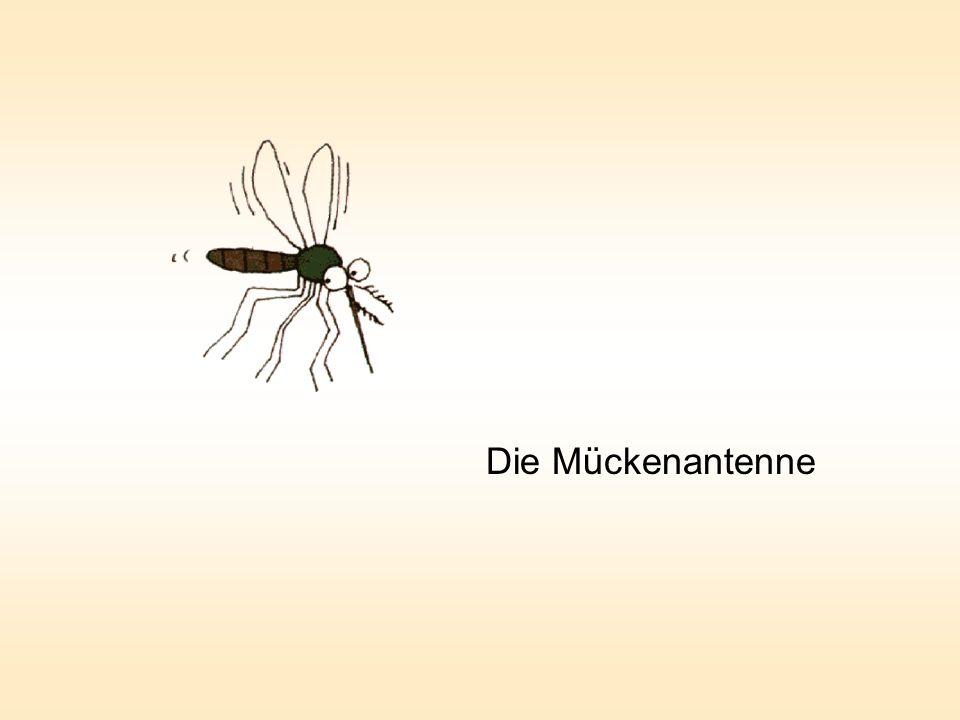Der Tenor und die Mücken 440 Hz Er übt den Kammerton a Flügelschlagfrequenz des Mückenweibchens =