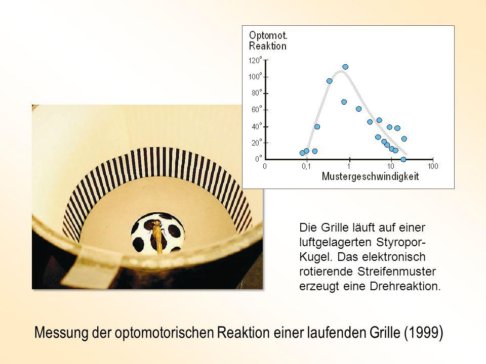 Messung der optomotorischen Reaktion einer laufenden Grille (1999 ) Die Grille läuft auf einer luftgelagerten Styropor- Kugel.