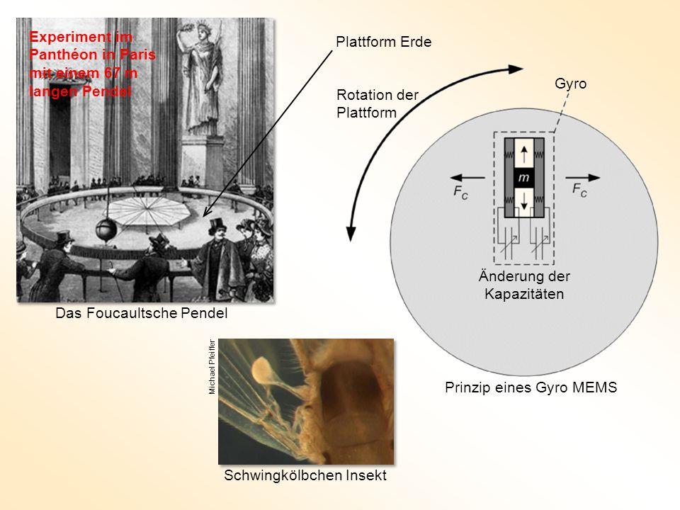 Das Foucaultsche Pendel Michael Pfeiffer Schwingkölbchen Insekt Rotation der Plattform Gyro Änderung der Kapazitäten Prinzip eines Gyro MEMS Plattform Erde Experiment im Panthéon in Paris mit einem 67 m langen Pendel