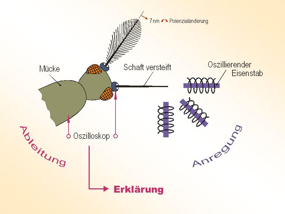 Künstliche Schwingkölbchen übernehmen die Giermessungen und die Richtungssteuerung des Quadrokopters.