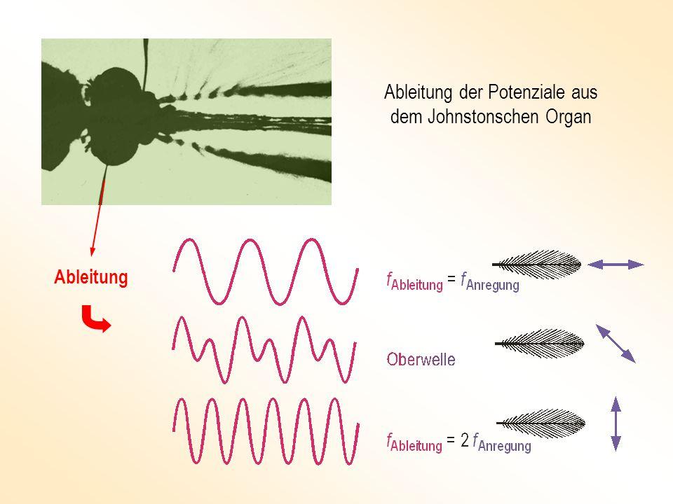 Mathematisches Modell Verhaltensphysiologische Methode Kontrollierte Reizgebung Messung der Reaktion