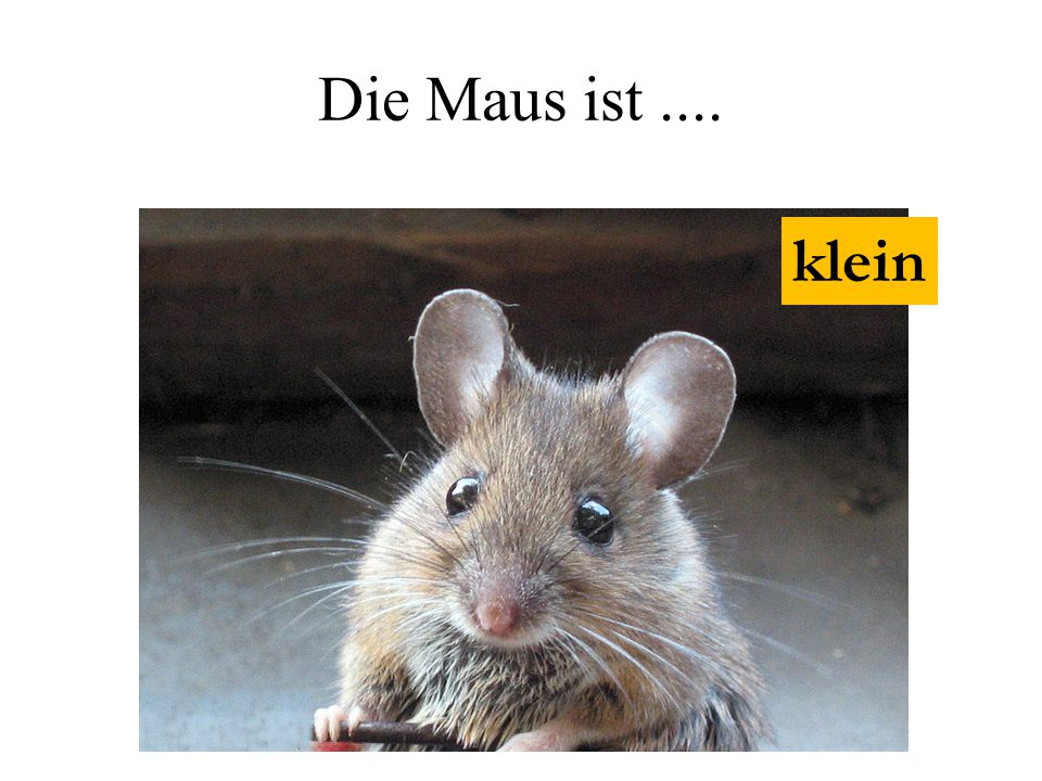 Die Maus ist.... klein