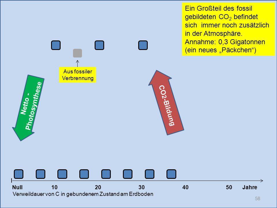 58 1020304050 Jahre Verweildauer von C in gebundenem Zustand am Erdboden Null Netto - Photosynthese CO 2 -Bildung Ein Großteil des fossil gebildeten C