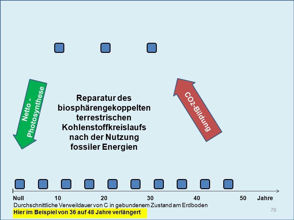 Netto - Photosynthese 78 1020304050 Jahre Durchschnittliche Verweildauer von C in gebundenem Zustand am Erdboden Hier im Beispiel von 36 auf 48 Jahre