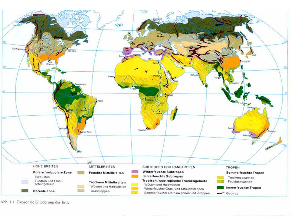 Immerfeuchte Tropen Wurzeltypen im tropischen Regenwald