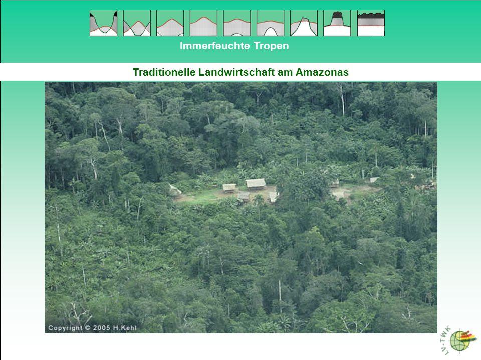 Immerfeuchte Tropen Traditionelle Landwirtschaft am Amazonas