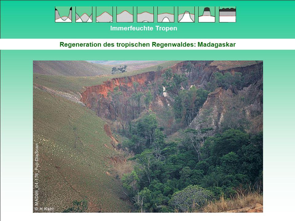 Immerfeuchte Tropen Regeneration des tropischen Regenwaldes: Madagaskar