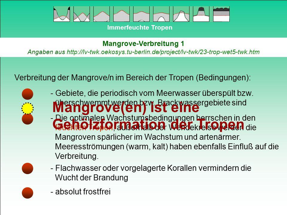 Immerfeuchte Tropen Mangrove-Verbreitung 1 Angaben aus http://lv-twk.oekosys.tu-berlin.de/project/lv-twk/23-trop-wet5-twk.htm Verbreitung der Mangrove