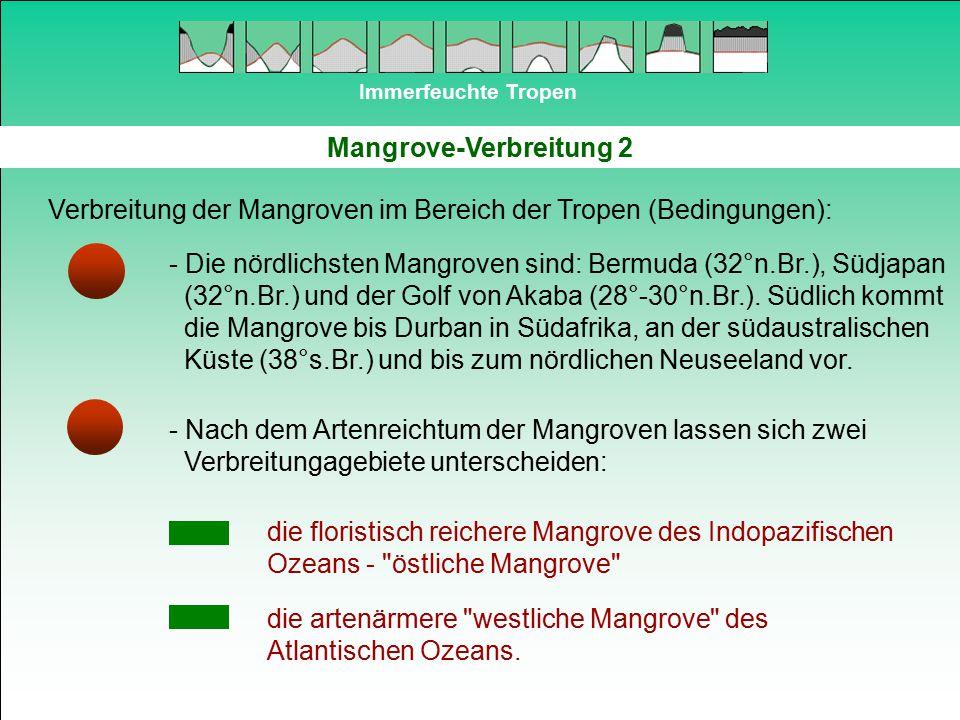 Immerfeuchte Tropen Mangrove-Verbreitung 2 Verbreitung der Mangroven im Bereich der Tropen (Bedingungen): - Die nördlichsten Mangroven sind: Bermuda (