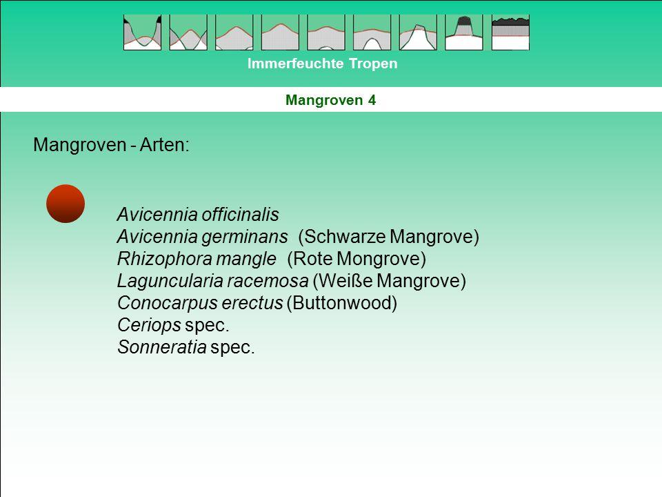 Immerfeuchte Tropen Mangroven 4 Mangroven - Arten: Avicennia officinalis Avicennia germinans (Schwarze Mangrove) Rhizophora mangle (Rote Mongrove) Lag