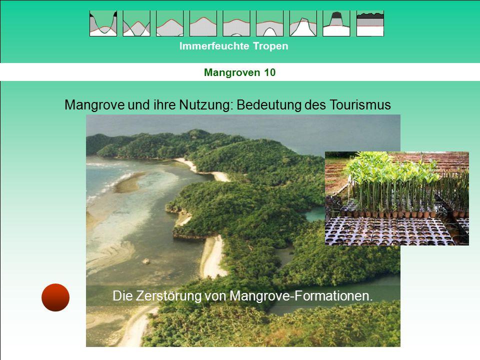 Immerfeuchte Tropen Mangroven 10 Mangrove und ihre Nutzung: Bedeutung des Tourismus Die Zerstörung von Mangrove-Formationen.