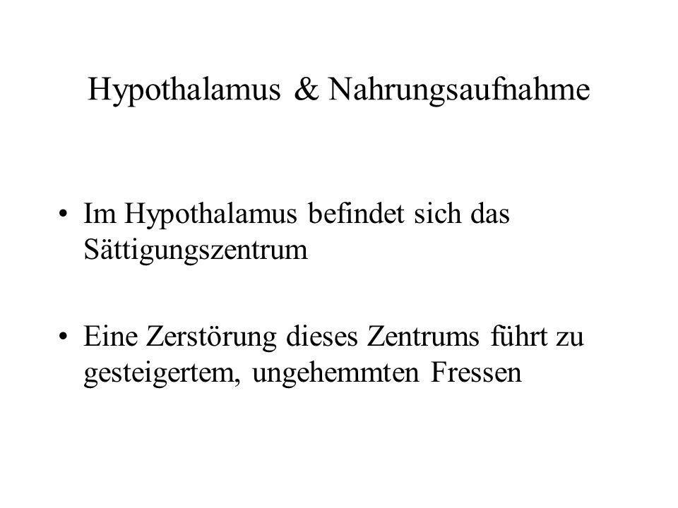 Hypothalamus & Nahrungsaufnahme Im Hypothalamus befindet sich das Sättigungszentrum Eine Zerstörung dieses Zentrums führt zu gesteigertem, ungehemmten
