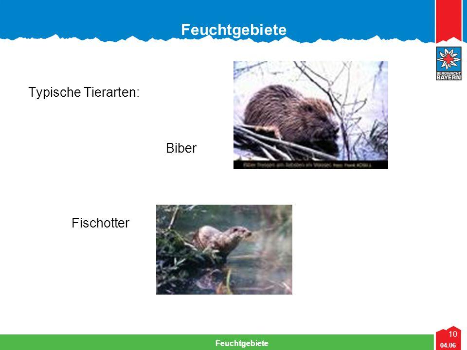 10 04.06 Feuchtgebiete Lehrteam Bergwacht Viechtach Feuchtgebiete Typische Tierarten: Biber Fischotter