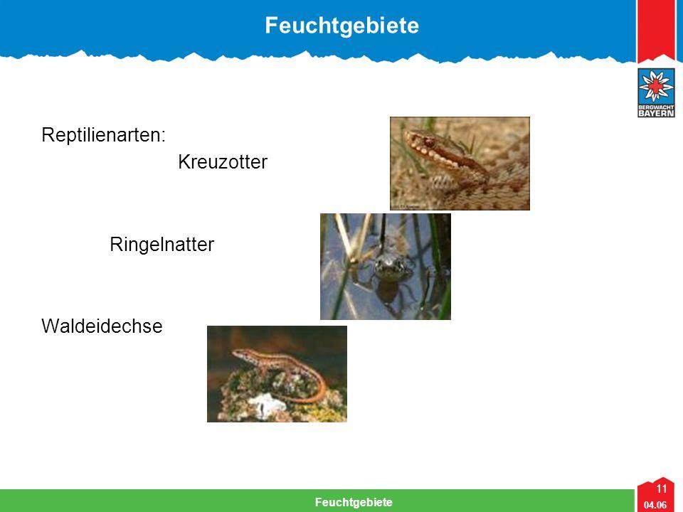 11 04.06 Feuchtgebiete Lehrteam Bergwacht Viechtach Feuchtgebiete Reptilienarten: Kreuzotter Ringelnatter Waldeidechse