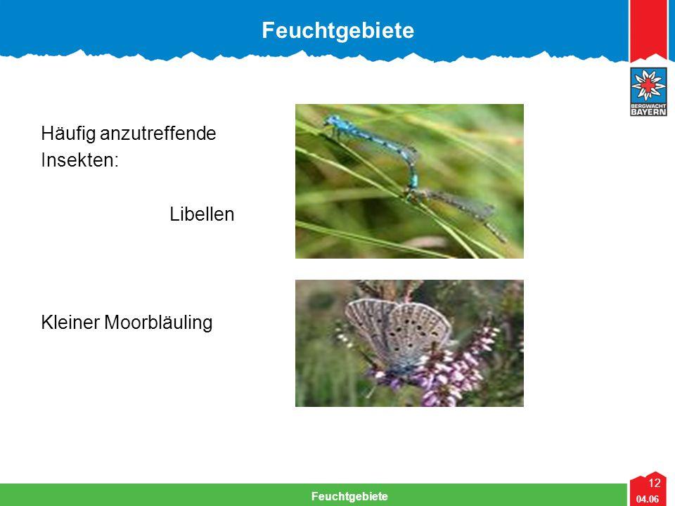12 04.06 Feuchtgebiete Lehrteam Bergwacht Viechtach Feuchtgebiete Häufig anzutreffende Insekten: Libellen Kleiner Moorbläuling