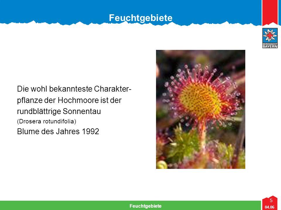 5 04.06 Feuchtgebiete Lehrteam Bergwacht Viechtach Feuchtgebiete Die wohl bekannteste Charakter- pflanze der Hochmoore ist der rundblättrige Sonnentau (Drosera rotundifolia) Blume des Jahres 1992