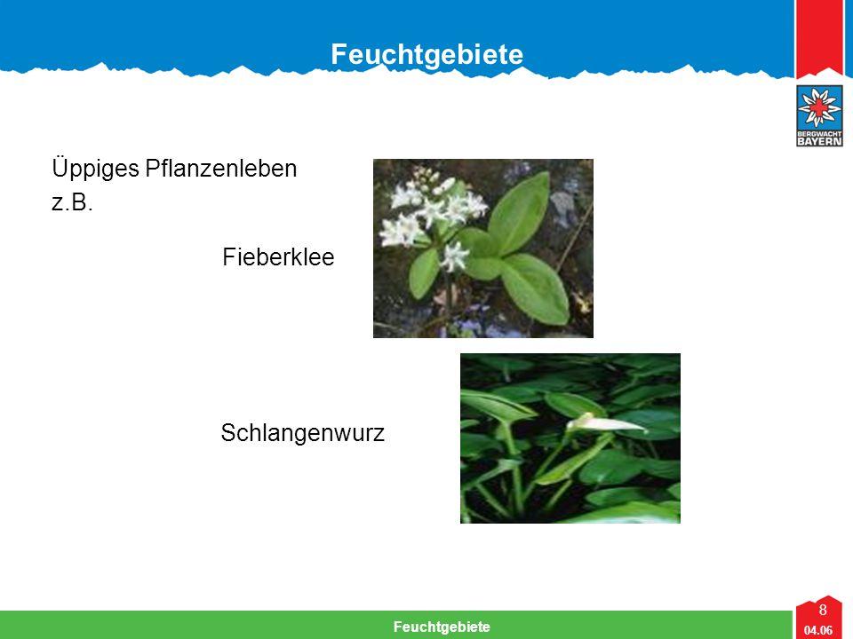 8 04.06 Feuchtgebiete Lehrteam Bergwacht Viechtach Feuchtgebiete Üppiges Pflanzenleben z.B. Fieberklee Schlangenwurz