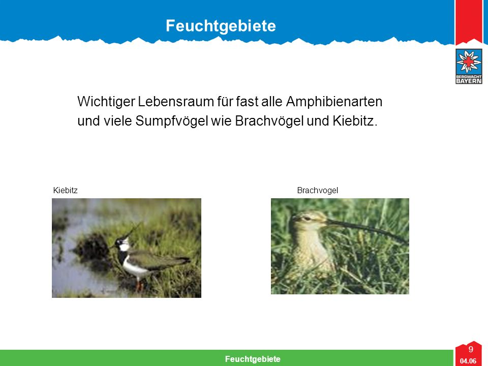 9 04.06 Feuchtgebiete Wichtiger Lebensraum für fast alle Amphibienarten und viele Sumpfvögel wie Brachvögel und Kiebitz. KiebitzBrachvogel