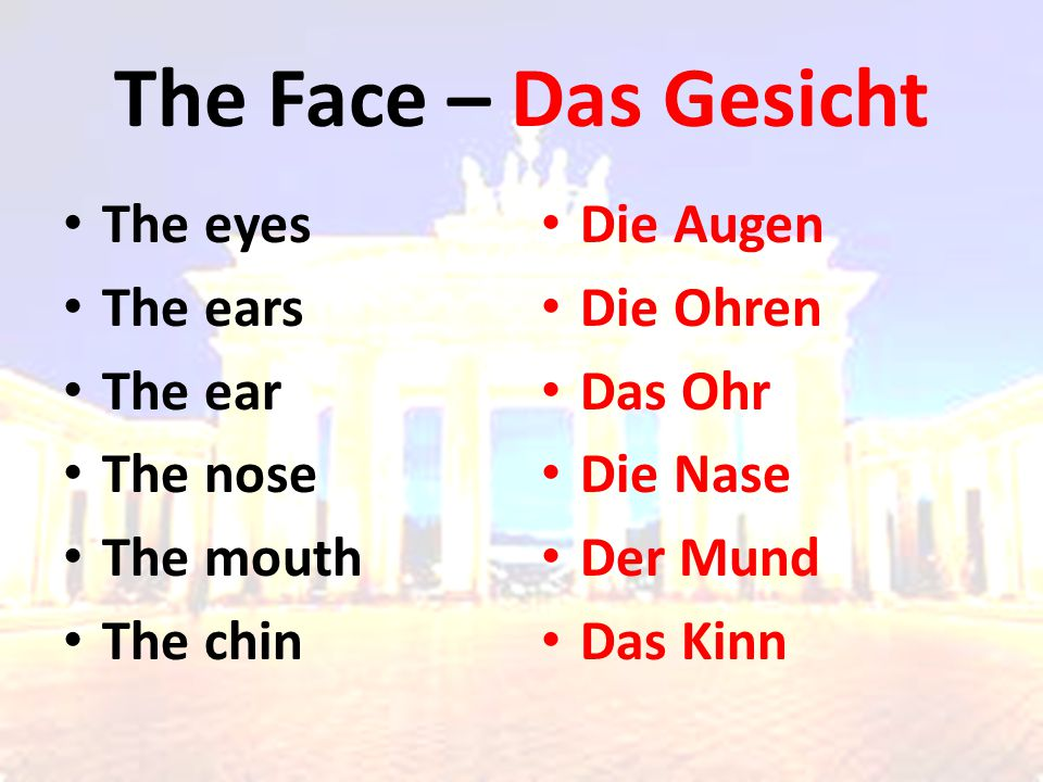 The Face – Das Gesicht The eyes The ears The ear The nose The mouth The chin Die Augen Die Ohren Das Ohr Die Nase Der Mund Das Kinn