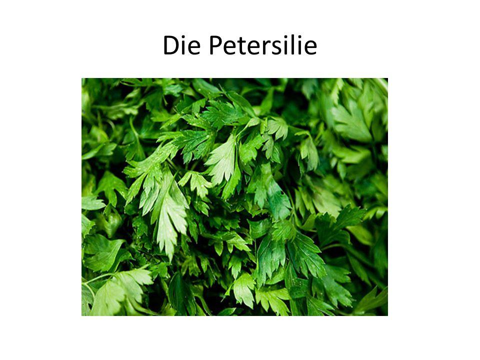 Die Petersilie