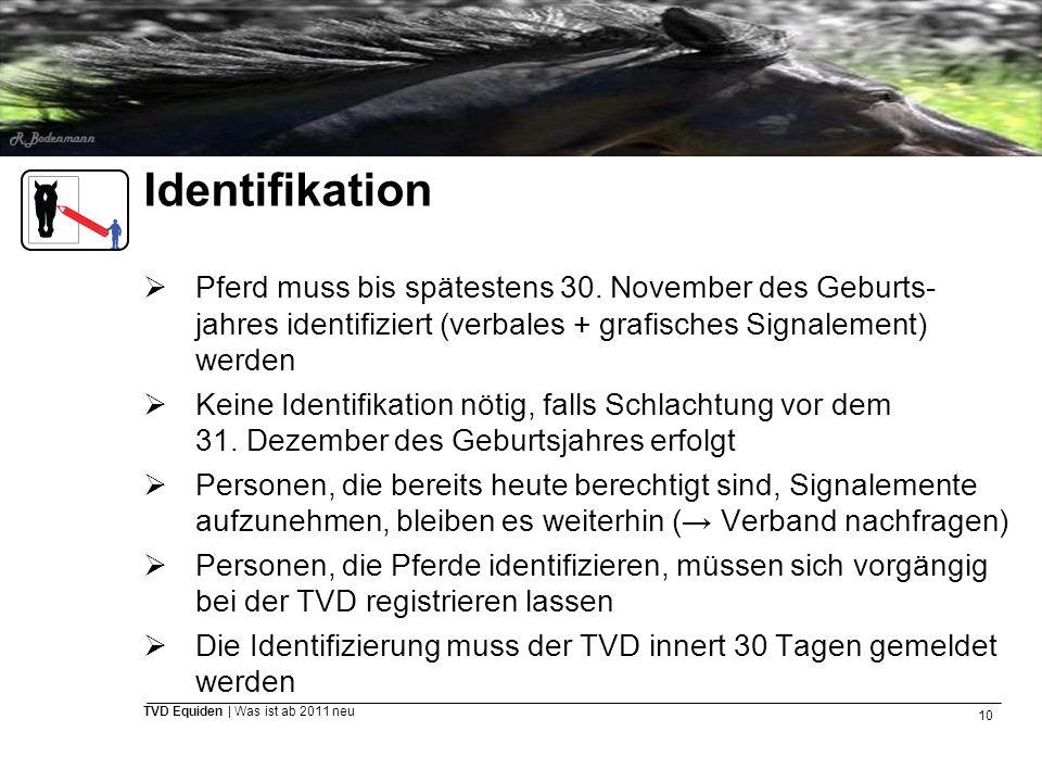 10 TVD Equiden | Was ist ab 2011 neu Identifikation  Pferd muss bis spätestens 30. November des Geburts- jahres identifiziert (verbales + grafisches