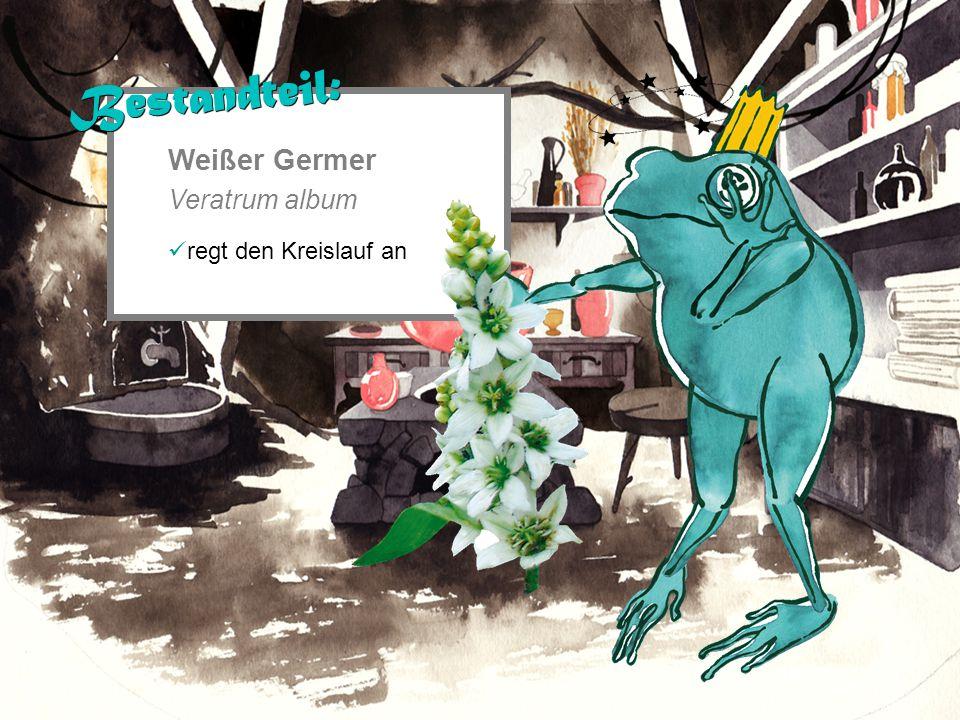Weißer Germer Veratrum album regt den Kreislauf an Bestandteil:
