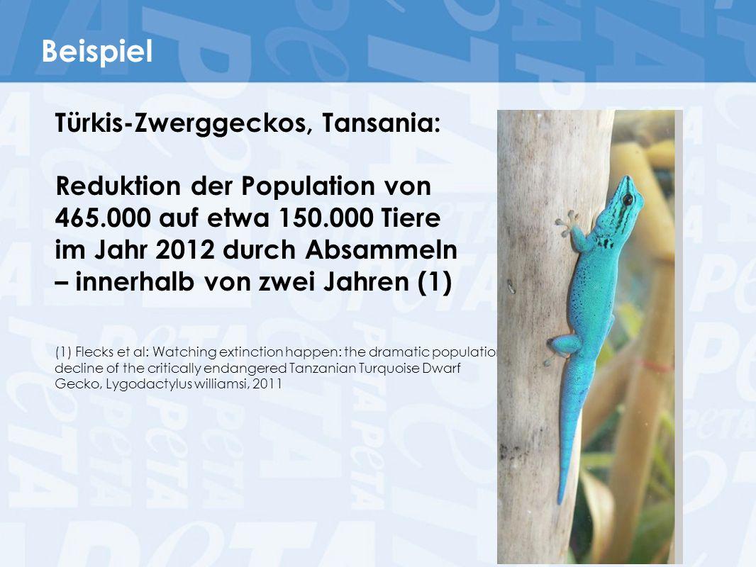 Beispiel Türkis-Zwerggeckos, Tansania: Reduktion der Population von 465.000 auf etwa 150.000 Tiere im Jahr 2012 durch Absammeln – innerhalb von zwei J