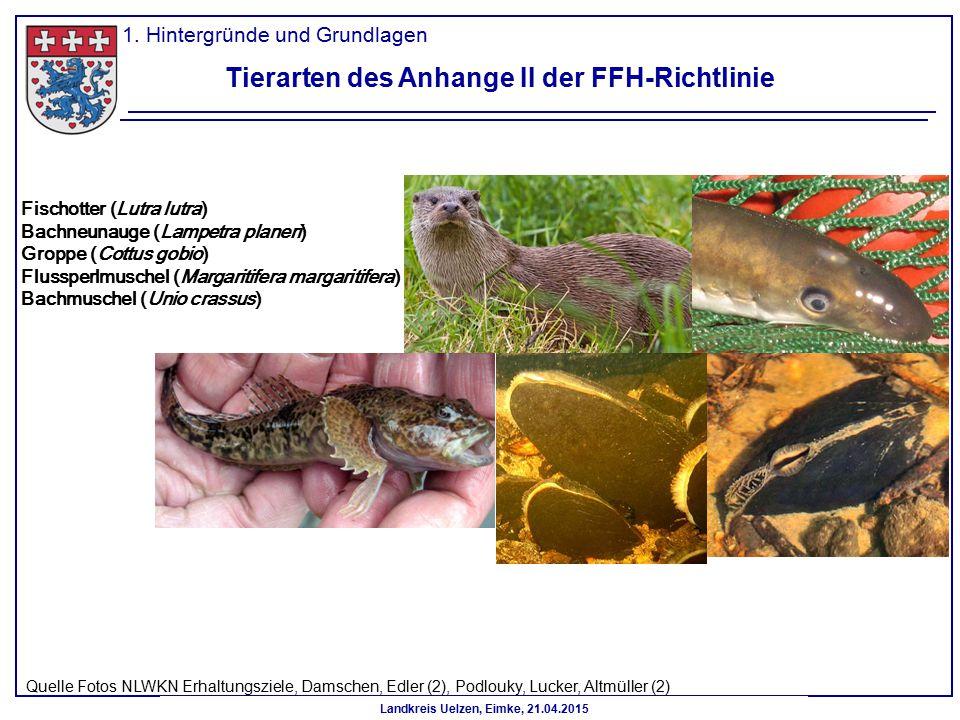 Landkreis Uelzen, Eimke, 21.04.2015 Tierarten des Anhange II der FFH-Richtlinie 1. Hintergründe und Grundlagen Fischotter (Lutra lutra) Bachneunauge (