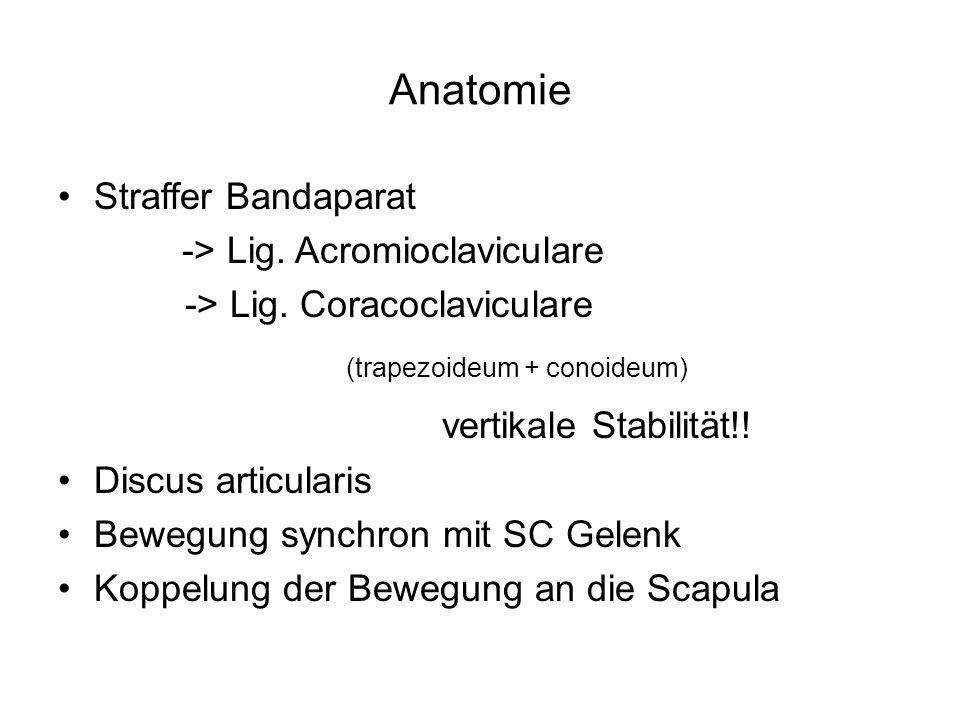 Anatomie Straffer Bandaparat -> Lig. Acromioclaviculare -> Lig. Coracoclaviculare (trapezoideum + conoideum) vertikale Stabilität!! Discus articularis