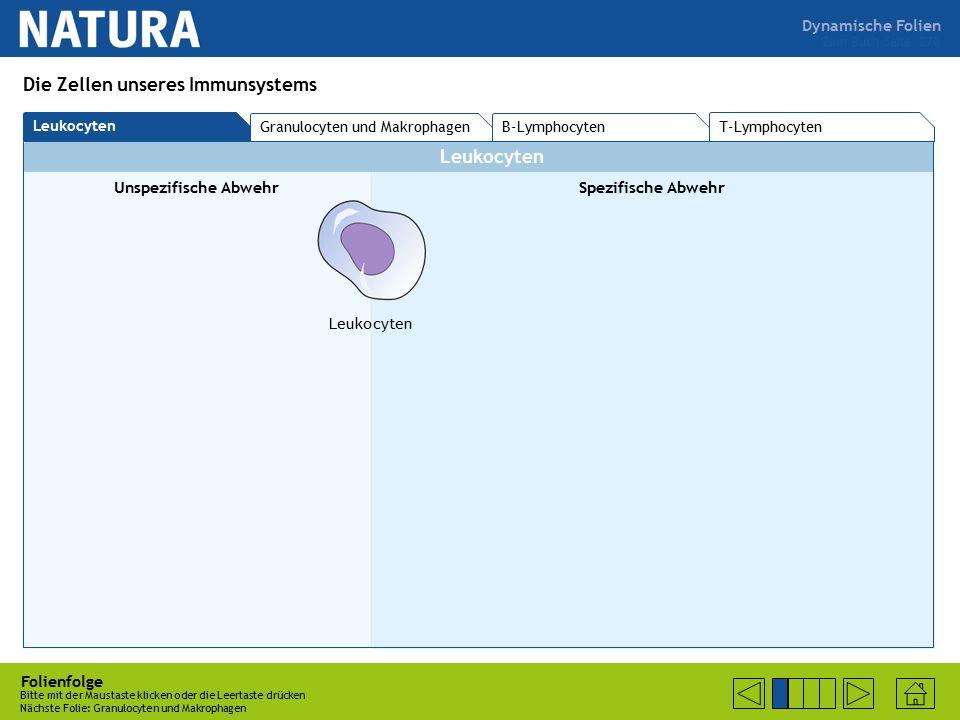 Zum Buch Seite 270 Folienfolge Bitte mit der Maustaste klicken oder die Leertaste drücken Nächste Folie: Granulocyten und Makrophagen Die Zellen unseres Immunsystems T-Lymphocyten Leukocyten Granulocyten und Makrophagen B-Lymphocyten Leukocyten Unspezifische AbwehrSpezifische Abwehr Leukocyten