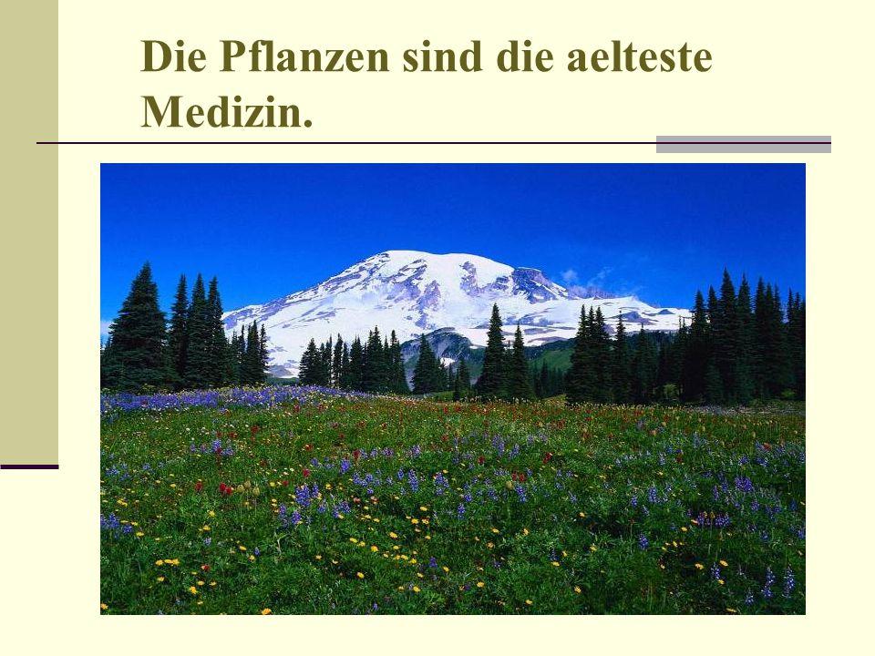 Die Pflanzen sind die aelteste Medizin.
