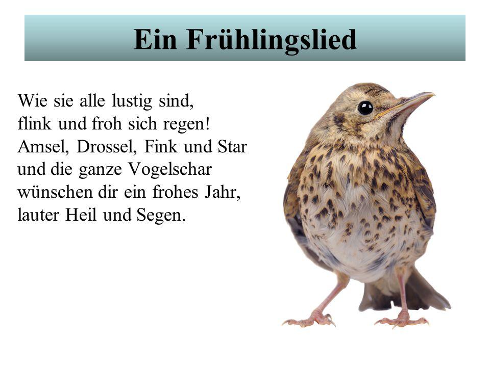 Ein Frühlingslied Alle Vögel sind schon da, alle Vögel, alle. Welch ein Singen, Musiziern, Pfeifen, Zwitschern, Tiriliern! Frühling will nun einmarsch