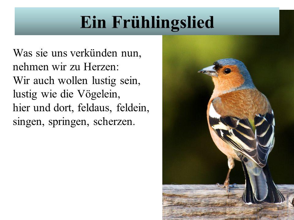 Ein Frühlingslied Wie sie alle lustig sind, flink und froh sich regen! Amsel, Drossel, Fink und Star und die ganze Vogelschar wünschen dir ein frohes