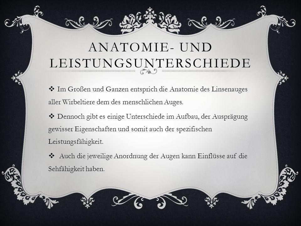 ANATOMIE- UND LEISTUNGSUNTERSCHIEDE  Im Großen und Ganzen entsprich die Anatomie des Linsenauges aller Wirbeltiere dem des menschlichen Auges.  Denn
