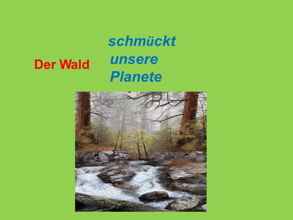 Der Wald schm ü ckt unsere Planete