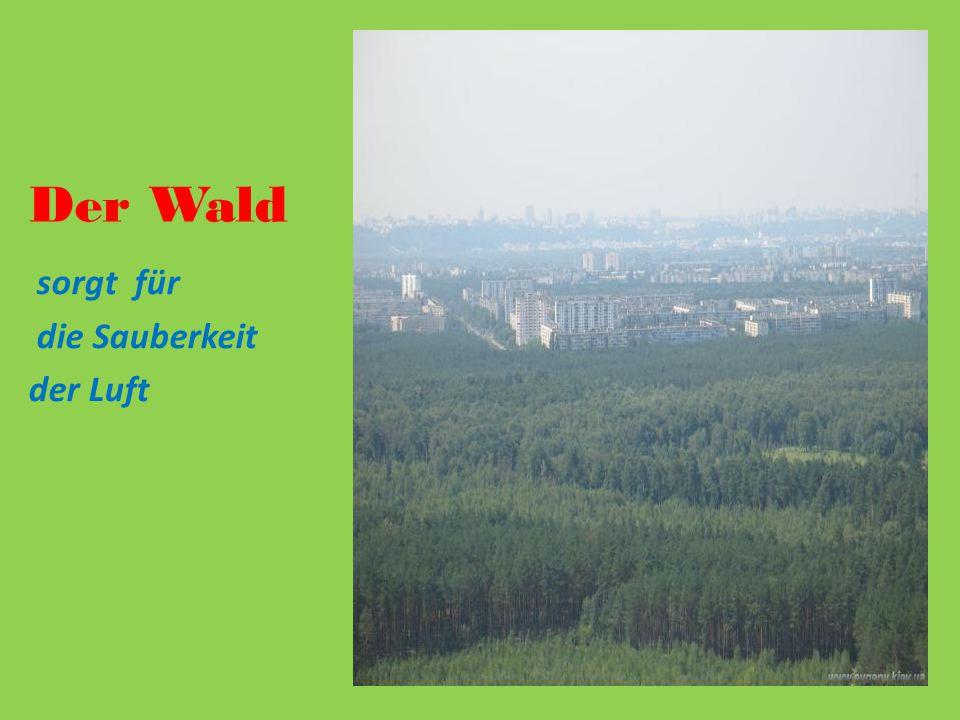 Der Wald sorgt für die Sauberkeit der Luft