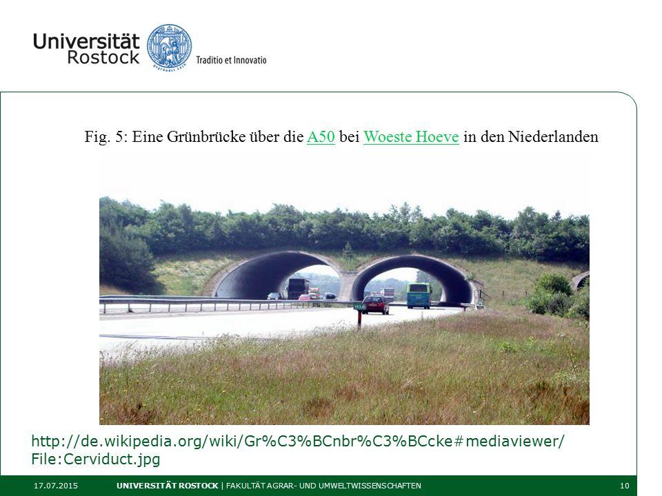 http://de.wikipedia.org/wiki/Gr%C3%BCnbr%C3%BCcke#mediaviewer/ File:Cerviduct.jpg 17.07.2015 UNIVERSITÄT ROSTOCK | FAKULTÄT AGRAR- UND UMWELTWISSENSCHAFTEN10 Fig.
