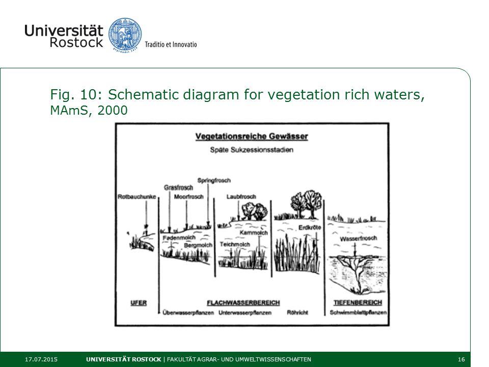 Fig. 10: Schematic diagram for vegetation rich waters, MAmS, 2000 17.07.2015 UNIVERSITÄT ROSTOCK | FAKULTÄT AGRAR- UND UMWELTWISSENSCHAFTEN16