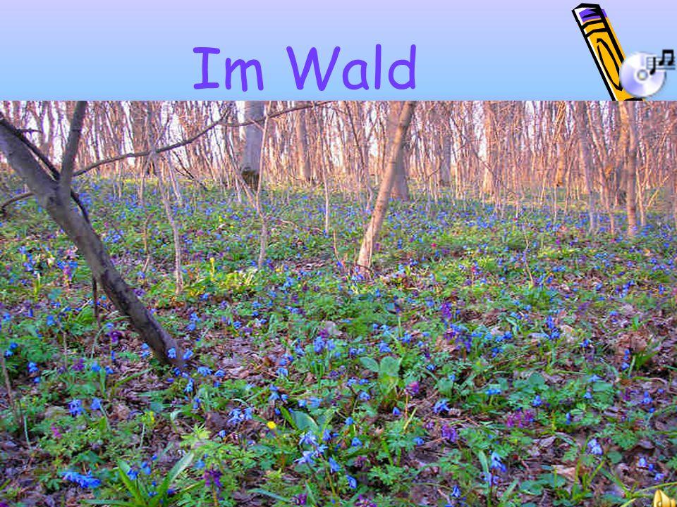 Im Wald 7слайд