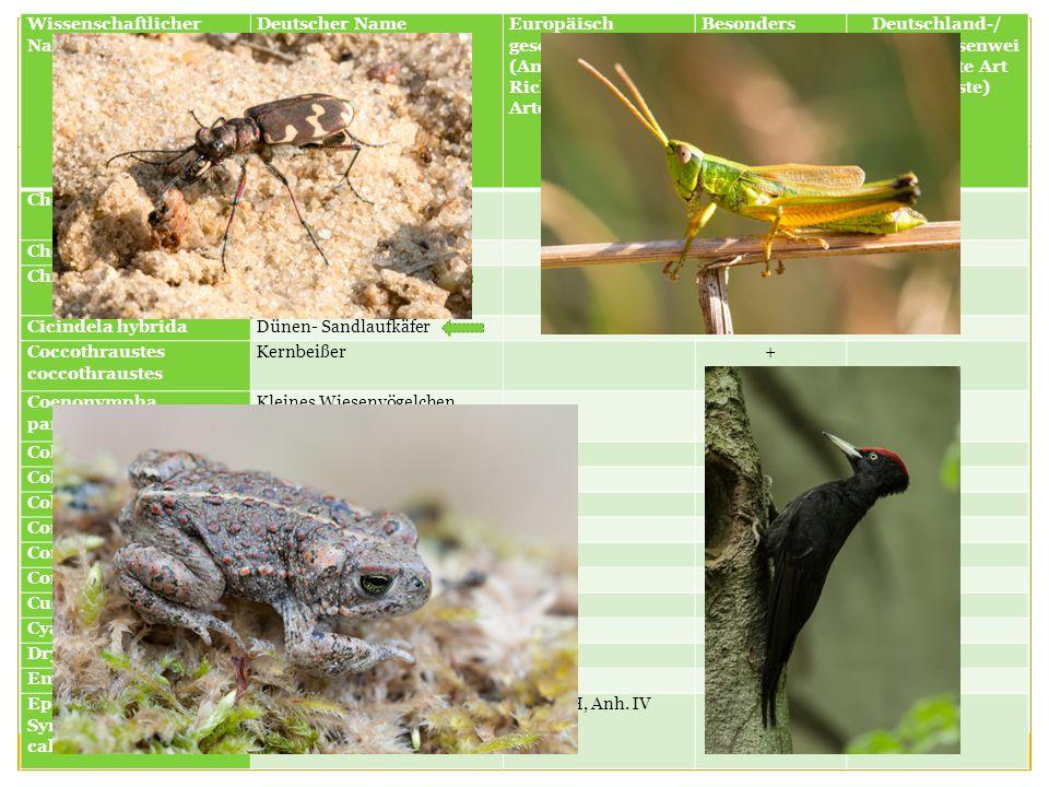 Wissenschaftlicher Name Deutscher NameEuropäisch geschützte Art (Anhang IV FFH- Richtlinie bzw. EG- Artenschutz-VO) Besonders geschützte (+)/ streng g