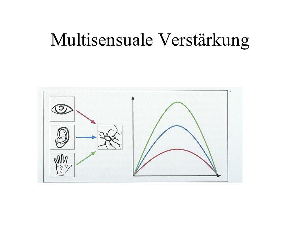 Multisensuale Verstärkung