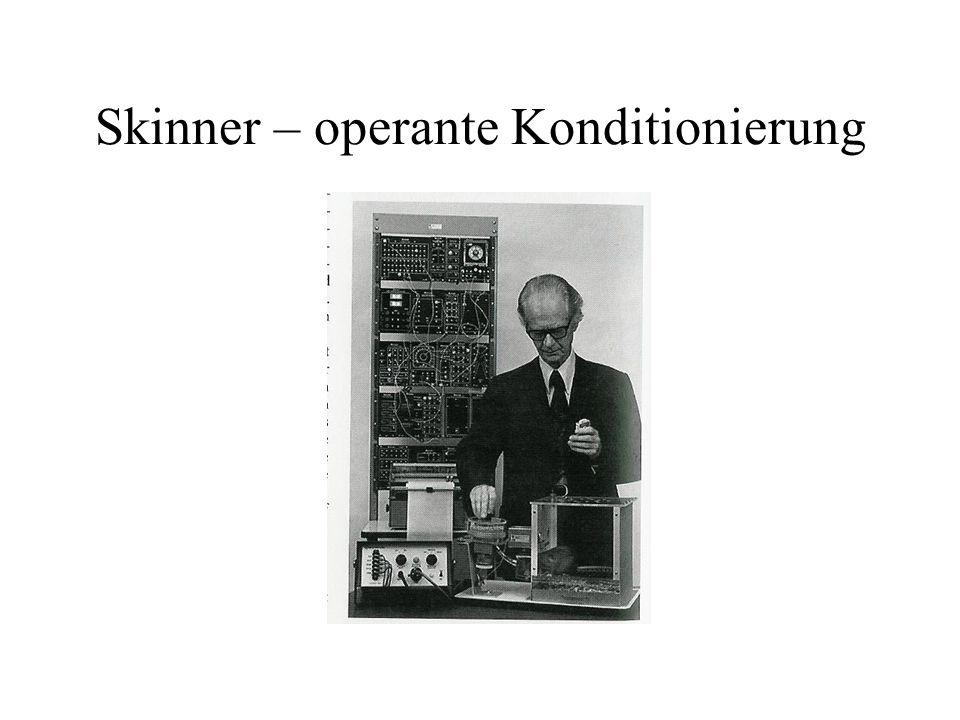Skinner – operante Konditionierung
