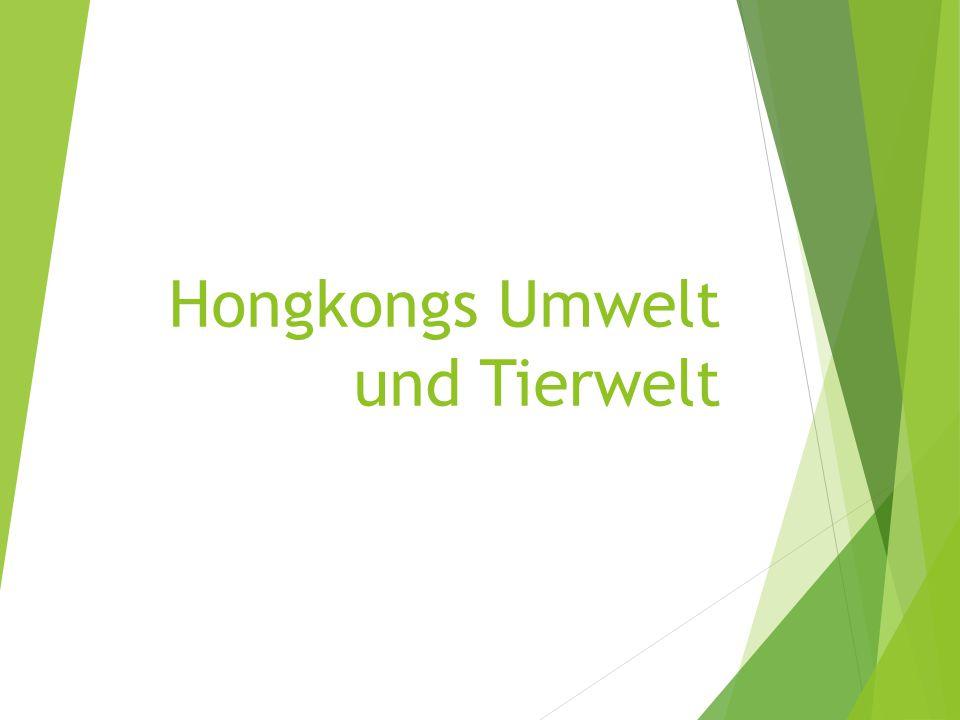 Hongkongs Umwelt und Tierwelt