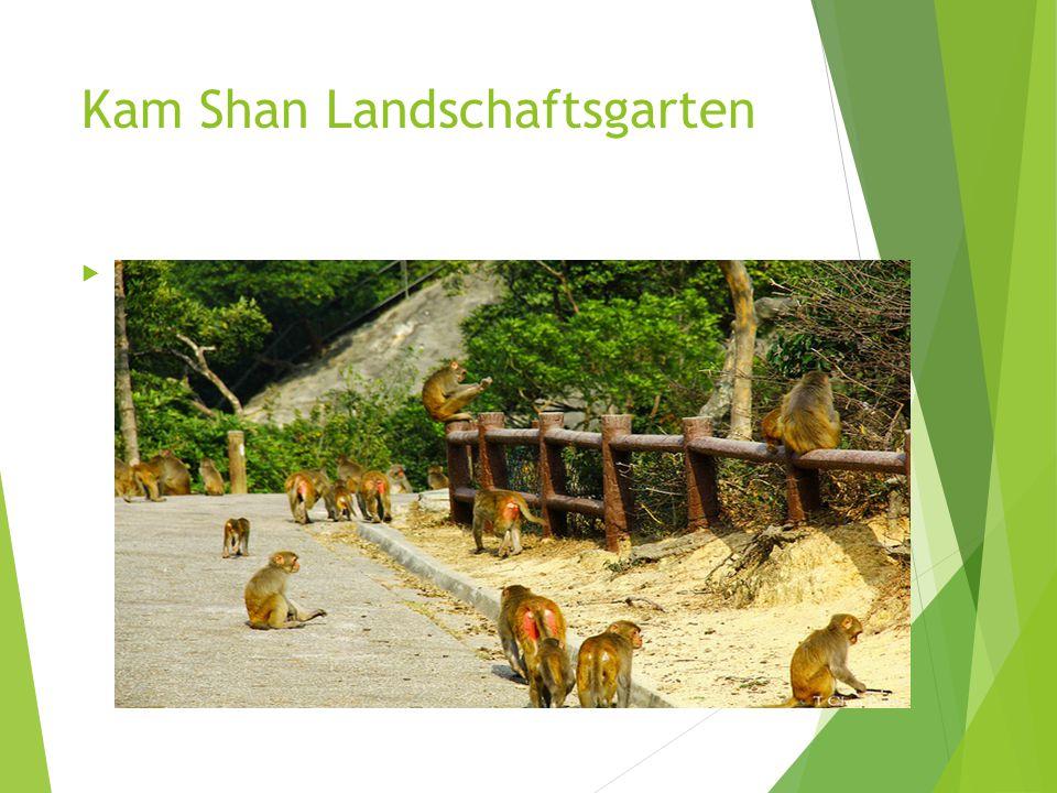 Kam Shan Landschaftsgarten  1,800 Makaken