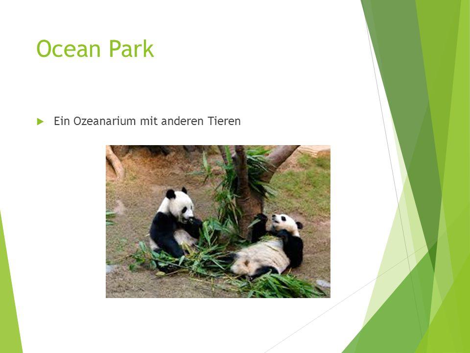 Ocean Park  Ein Ozeanarium mit anderen Tieren