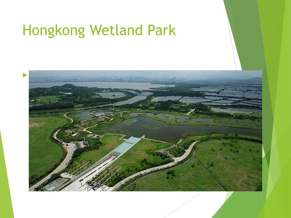 Hongkong Wetland Park  Mangrovenbaum