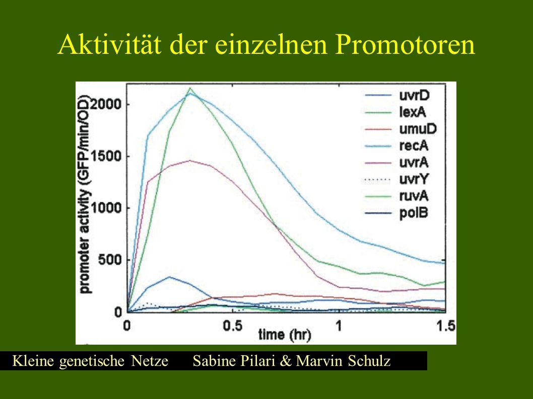Kleine genetische Netze Sabine Pilari & Marvin Schulz Errechnete kinetische Parameter KmKm V max