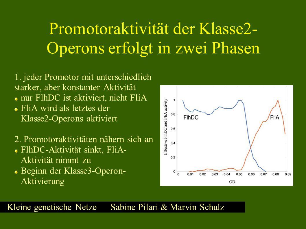 Kleine genetische Netze Sabine Pilari & Marvin Schulz Aktivität der Klasse2-Promotoren